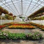 Let's Get Gardening: May 2017
