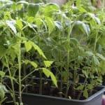 Let's Get Gardening: June 2017