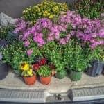 Let's Get Gardening: September 2017